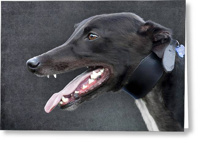 Greyhound Dog Portrait Greeting Card by Ethiriel  Photography