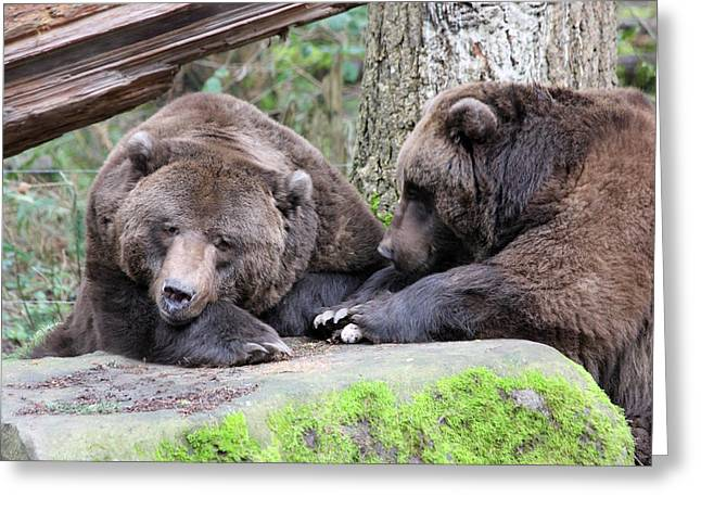 Grizzley - 0001 Greeting Card