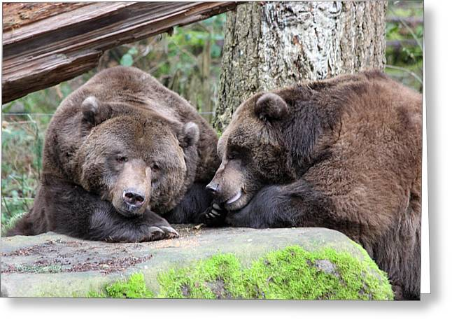 Grizzley - 0002 Greeting Card
