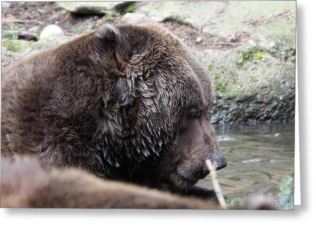 Grizzley - 0003 Greeting Card