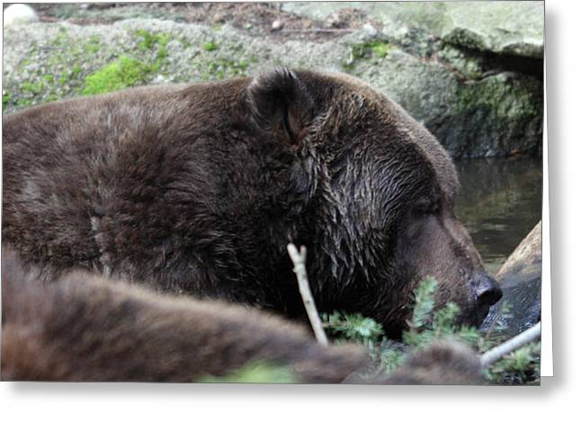 Grizzley - 0004 Greeting Card