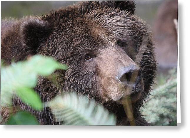 Grizzley - 0005 Greeting Card