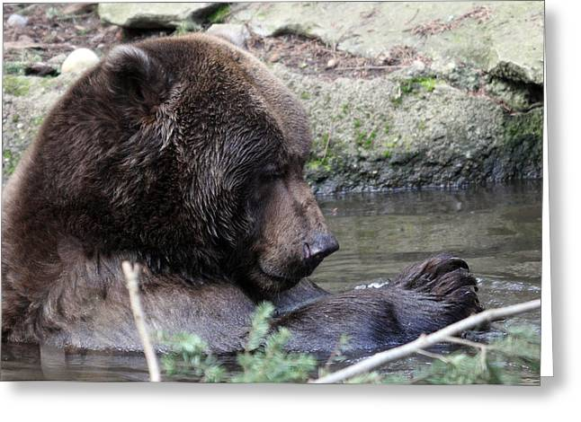 Grizzley - 0007 Greeting Card