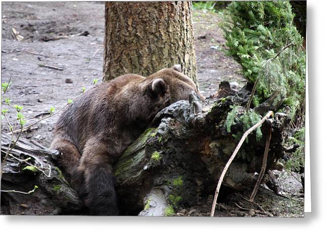 Grizzley - 0012 Greeting Card