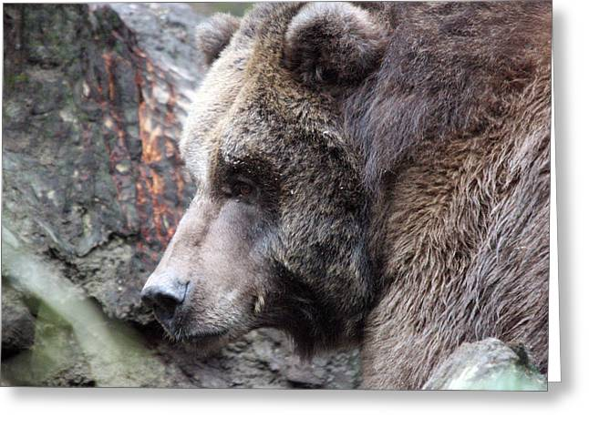 Grizzley - 0013 Greeting Card