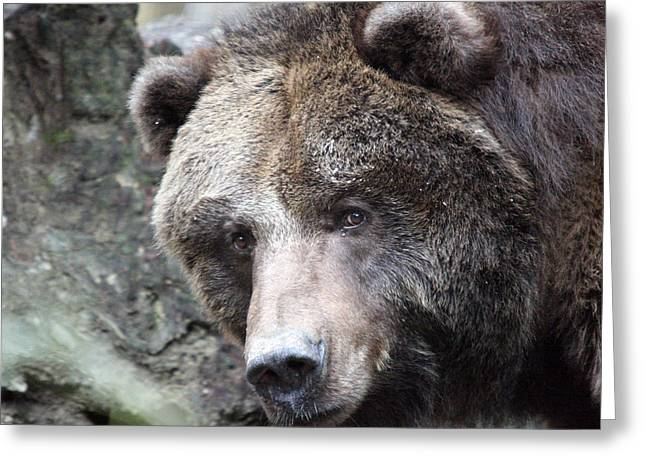 Greeting Card featuring the photograph Grizzley - 0015 by S and S Photo