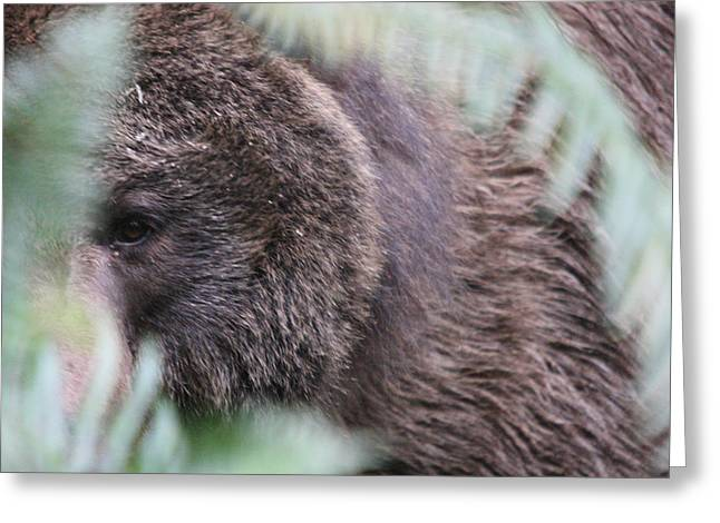 Greeting Card featuring the photograph Grizzley - 0016 by S and S Photo