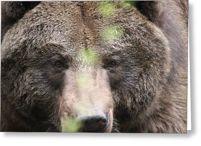 Greeting Card featuring the photograph Grizzley - 0017 by S and S Photo