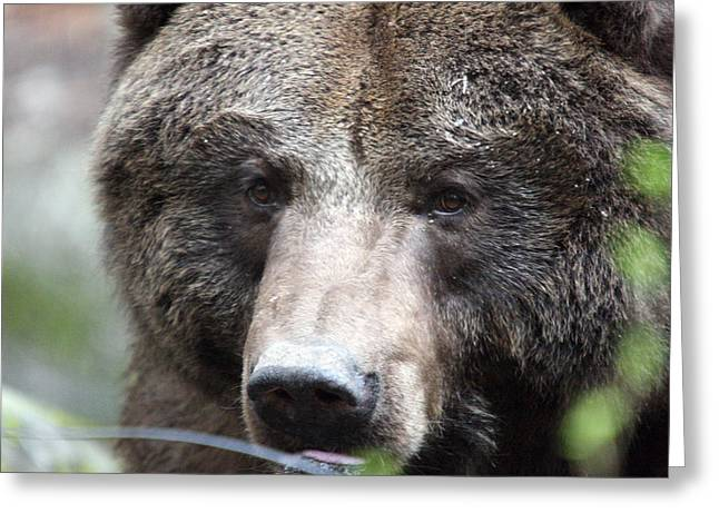 Greeting Card featuring the photograph Grizzley - 0018 by S and S Photo