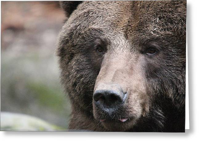 Greeting Card featuring the photograph Grizzley - 0019 by S and S Photo