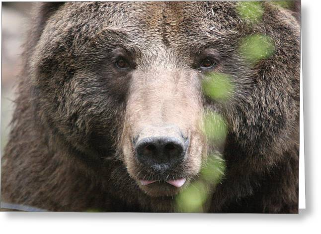 Greeting Card featuring the photograph Grizzley - 0020 by S and S Photo