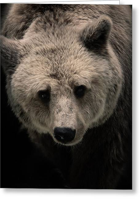 Grizzly Greeting Card by Ivica Vulelija