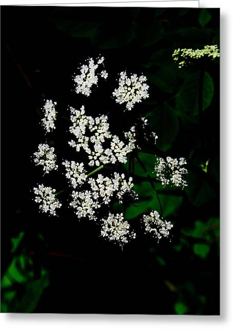 Ground-elder Greeting Card