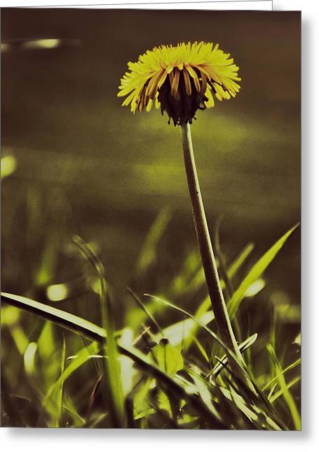 Ground Level Sun Greeting Card by Odd Jeppesen
