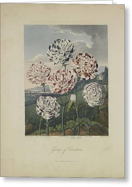 Group Of Carnations Greeting Card by Robert John Thornton