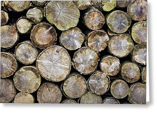 Group Of Logs Greeting Card