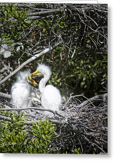 Growing Nestlings Greeting Card by Phill Doherty
