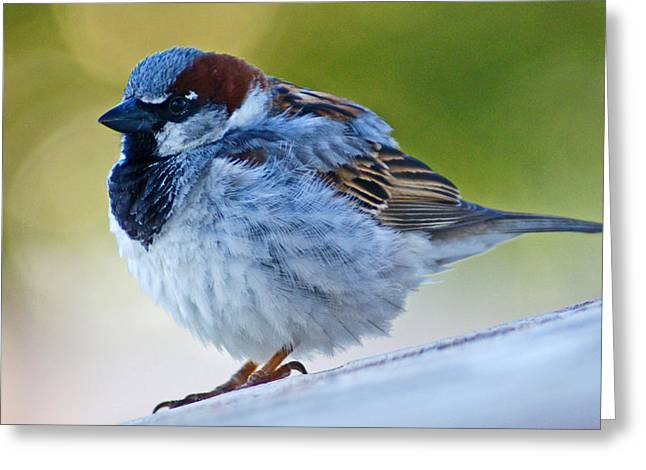 Guard Bird Greeting Card by Colleen Coccia
