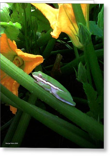 Greeting Card featuring the photograph Guardian Of The Zucchini by George Pedro