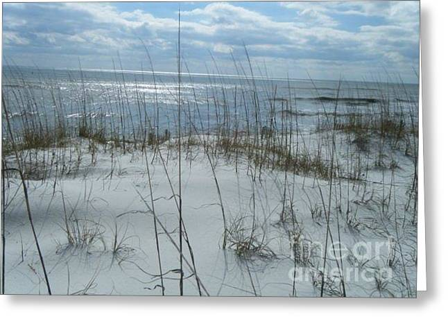 Greeting Card featuring the photograph Gulf Coasting  by Janice Spivey