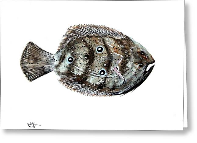 Gulf Flounder Greeting Card by J Vincent Scarpace
