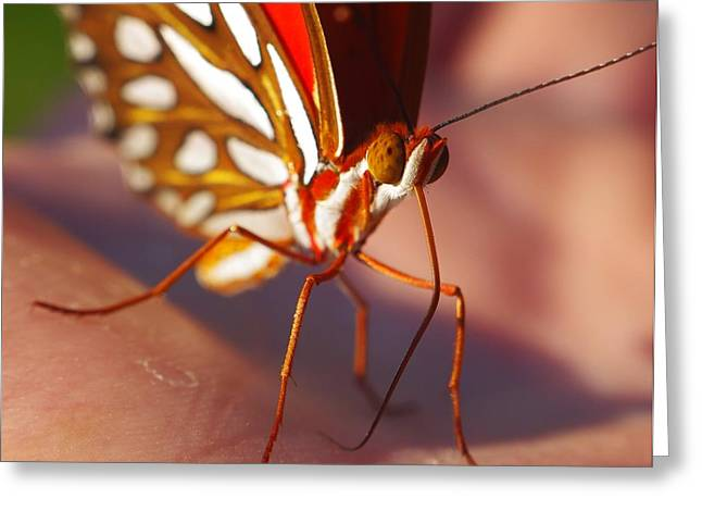 Gulf Fritillary Greeting Card by Billy  Griffis Jr