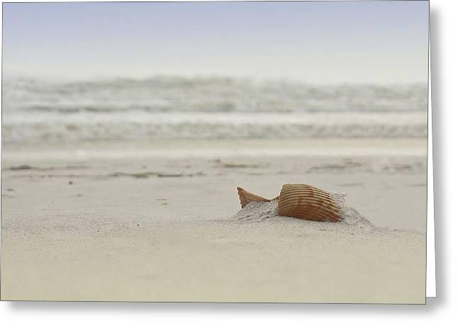 Gulf Shore Shell Greeting Card