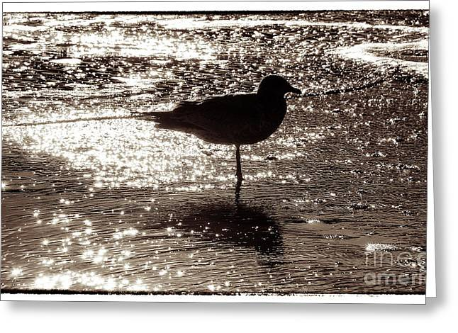 Gull In Silver Tidal Pool Greeting Card by Jim Moore