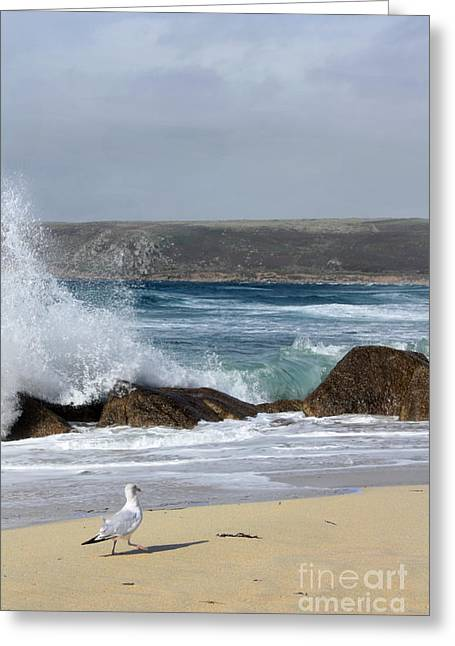 Greeting Card featuring the photograph Gull On The Sand by Linsey Williams