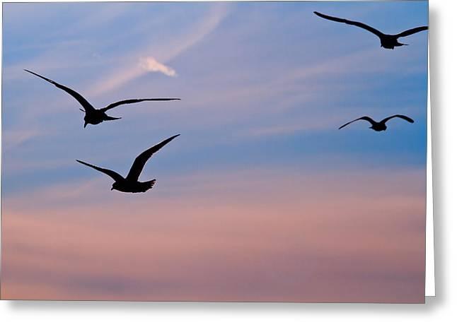 Gulls At Dusk Greeting Card by Karol Livote
