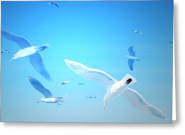 Greeting Card featuring the digital art Gulls In Flight by Michele Cornelius