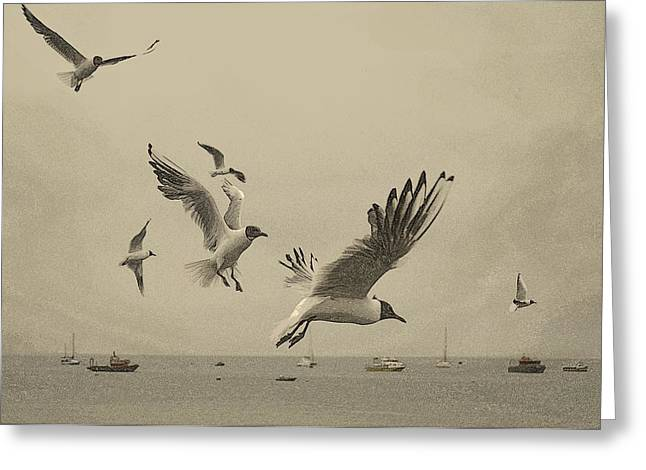 Greeting Card featuring the photograph Gulls by Linsey Williams