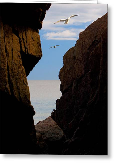 Greeting Card featuring the photograph Gulls Of Acadia by Brent L Ander