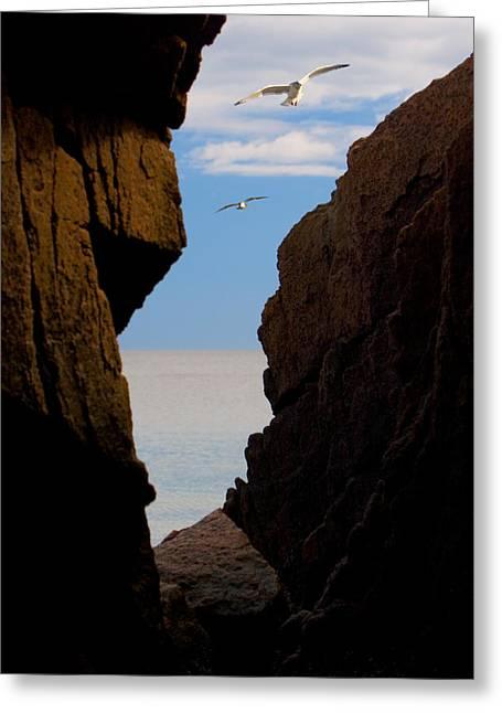 Gulls Of Acadia Greeting Card
