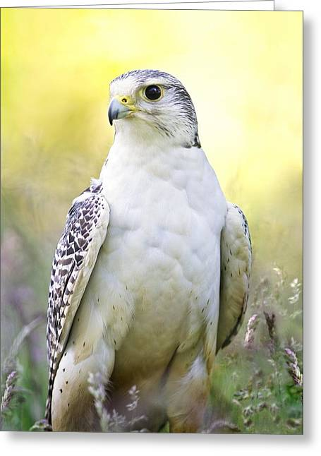 Gyrfalcon Greeting Card by Linda Wright