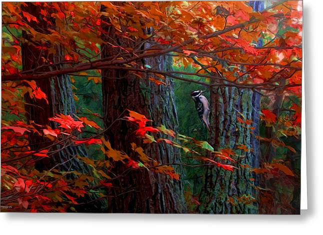Hairy Woodpecker Greeting Card by Ron Jones