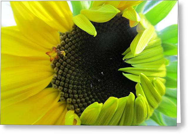 Greeting Card featuring the photograph Half-bloom Beauty by Tina M Wenger