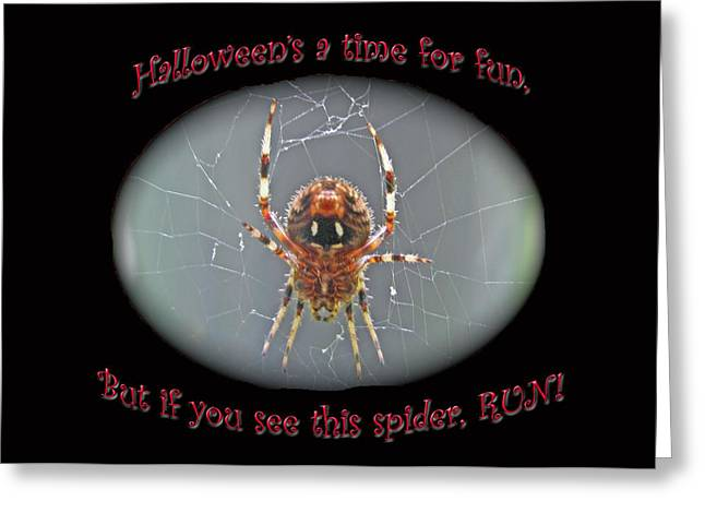 Halloween Card - Marbled Orb Weaver Spider Greeting Card by Mother Nature