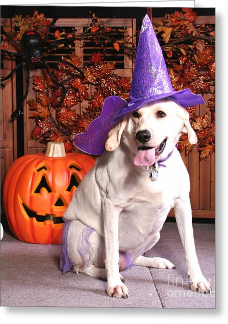 Halloween Dog Portraits - Labrador Greeting Card by Renae Laughner