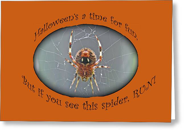 Halloween Greeting Card - Marbled Orb Weaver Spider Greeting Card by Mother Nature
