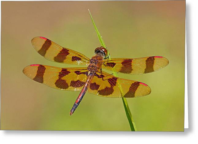 Halloween Pennant Greeting Card