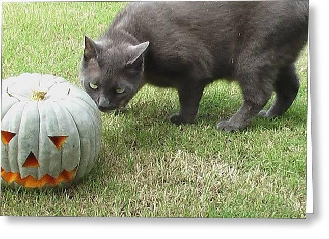 Halloween Penny 🐱 Greeting Card