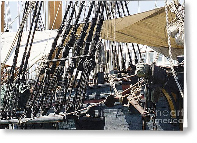 Halyards And Sheets Greeting Card by MaryJane Armstrong