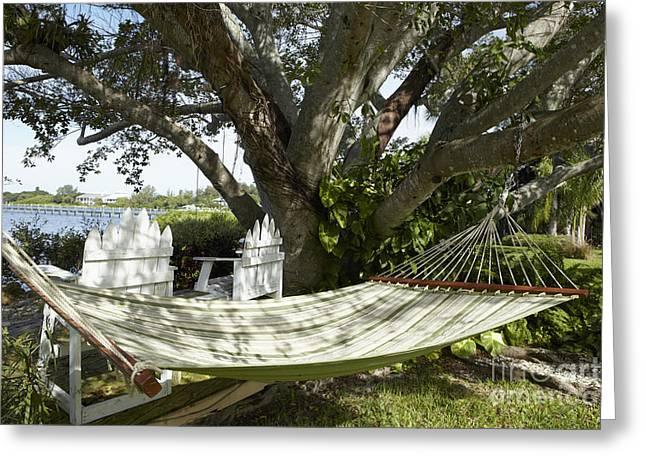 Hammock Under A Tree Greeting Card