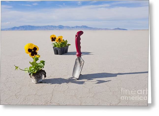 Hand Trowel And Plants Greeting Card by Thom Gourley/Flatbread Images, LLC
