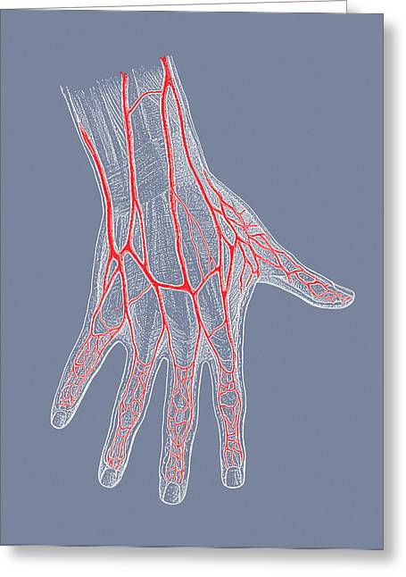 Hand Veins Greeting Card by Mehau Kulyk