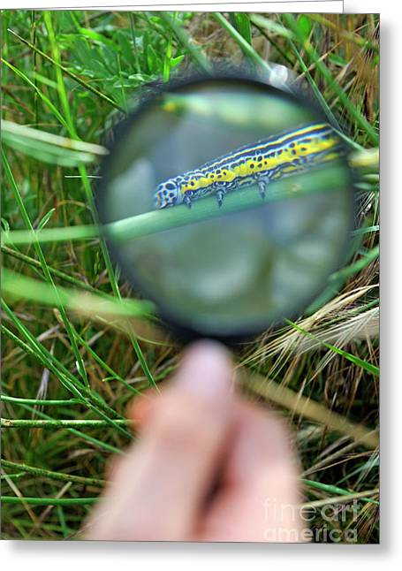 Hand With Magnifying Glass Looking At A Worm On Grass Greeting Card by Sami Sarkis