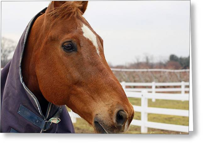 Greeting Card featuring the photograph Handsome Horse by Denise Pohl