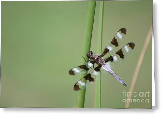 Hang On Greeting Card by Living Color Photography Lorraine Lynch