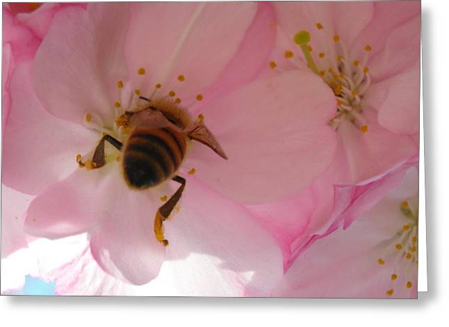 Hangin' With The Honey Bee Greeting Card by Stacy Lanyon